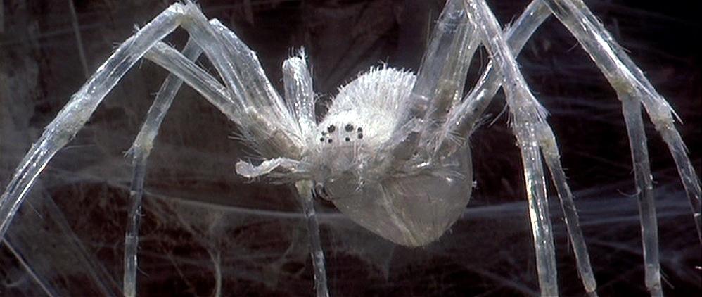 vr-krull-crystal-spider